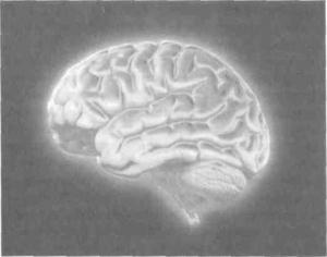 Активность работы мозга